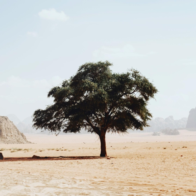 "You thought that the Sahara Desert was just desolate wasteland?😉 Actually, an Artificial Intelligence recently discovered over 1.8 billion trees in the Sahara Desert.😳Researchers used detailed satellite images from NASA and combined it with deep learning – an advanced artificial intelligence – to count the trees across this huge dryland. This was the first time ever someone has counted trees outside a forest area, and it wouldn't be possible without new technology. Trees play a big role in the global carbon budget, but the ones outside forest areas are usually not included in climate models. Therefore, the study provides important information and can help to better understand the importance of trees for biodiversity and ecosystems. ""Indeed, I think it marks the beginning of a new scientific era"" says Martin Brandt, lead author of the study. Source: University of Copenhagen  #sahara #desert #trees #future #artificialintelligence #deeplearning #technology #biodiversity #nature #nasa #dryland #ecosystem #earth #globalcarbonbudget #newera #climate #greenfuture #savetheplanet #greentech #global #carbon #satellite #study #count #forest #futuretechnology #celebratechange"